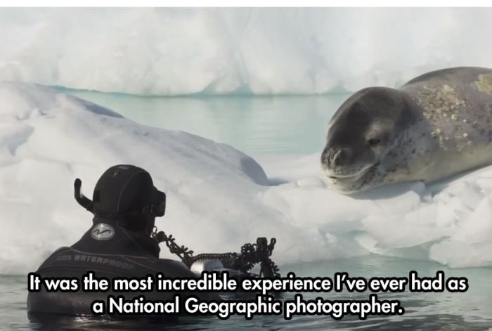 Photographer Comes Face To Face With A Leopard Seal