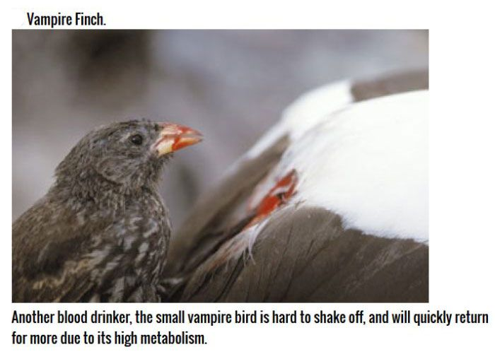 These Birds Are Natural Born Killers