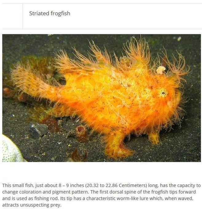 Strange Animals You Won't Believe Exist