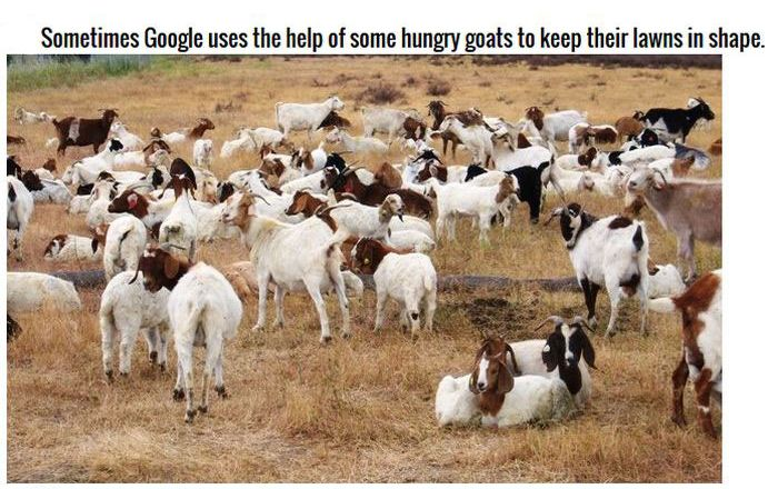 Google Facts Prove They Own The World