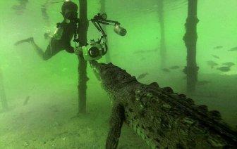 Way Too Close To A Crocodile