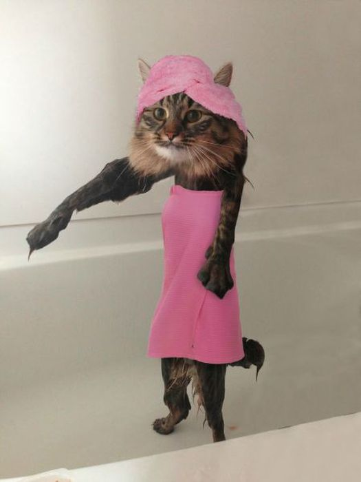 This New Wet Cat Meme Is Dominating The Internet