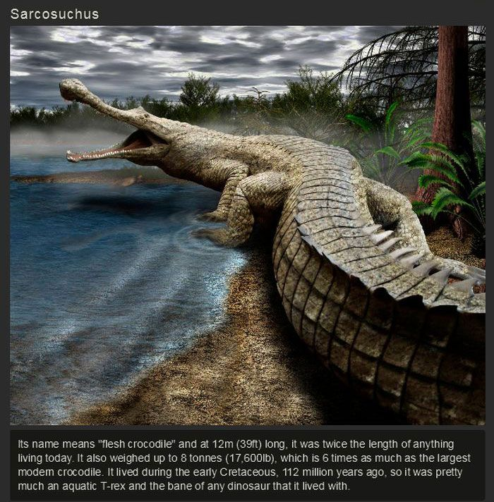 Ancient Animals That Once Ruled The Earth