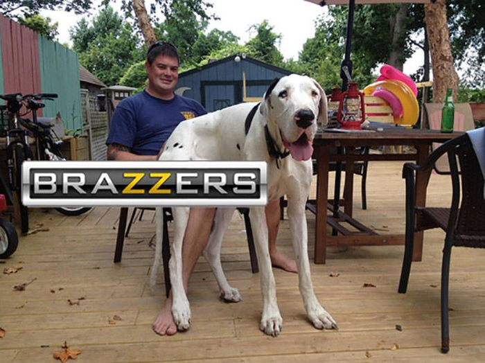 The Best of Brazzers Meme