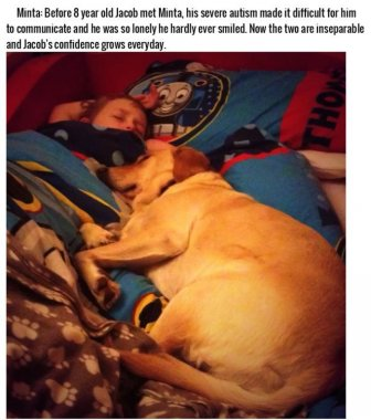 These Dogs Are More Than Pets, They're Heroes