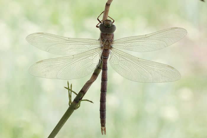 How A Dragonfly Is Born