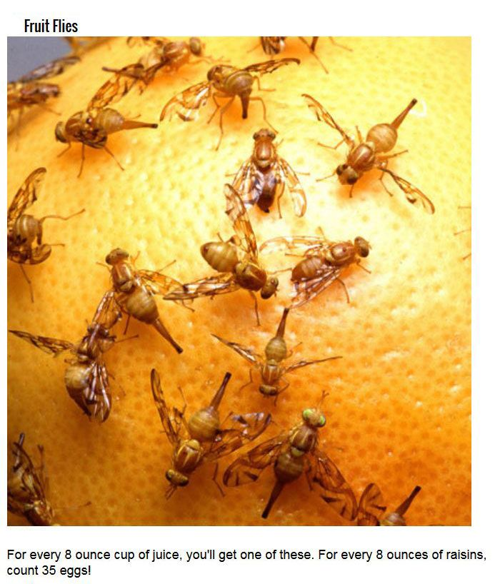 Disgusting Bugs You Didn't Know You've Been Eating