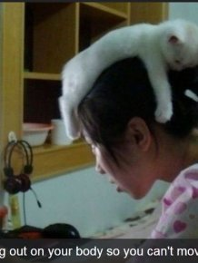 Annoying Things That Only Cats Can Get Away With