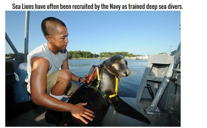 Animals You Didn't Know Were In The Military