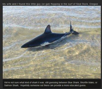 The Greatest Shark Throw Ever