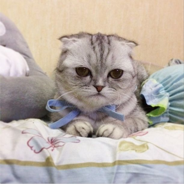Little P Is The World's Saddest Cat