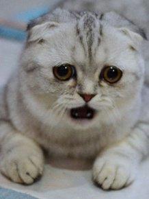 Little P Is The World's Saddest Cat