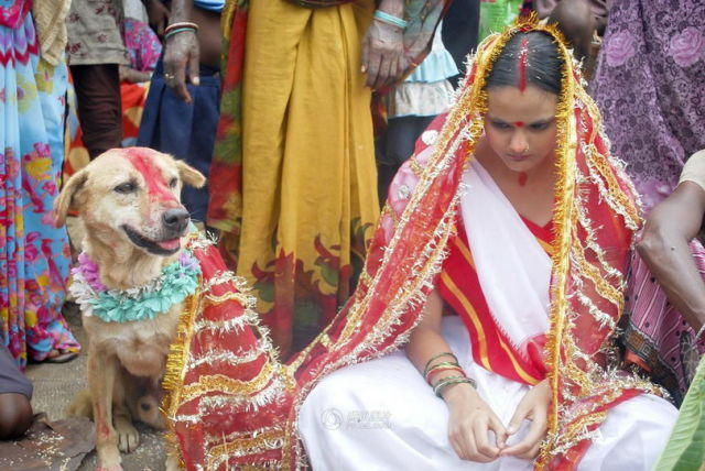Indian Girl Marries a Dog