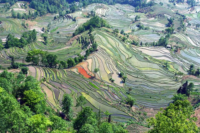 Amazingly Beautiful Rice Terraces