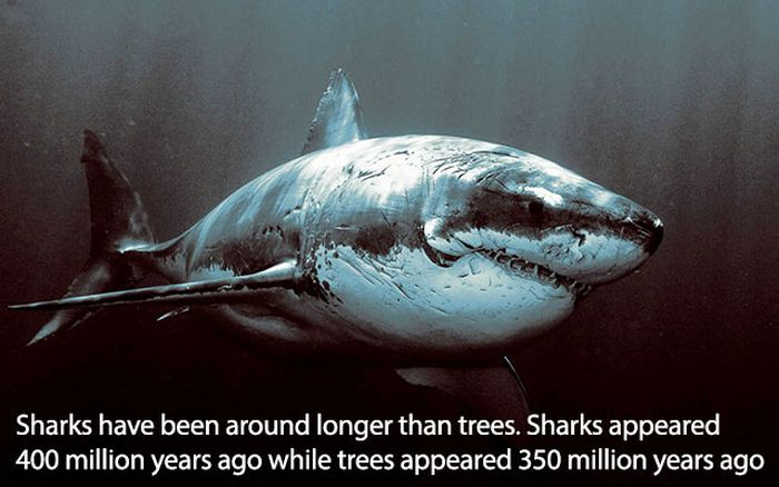 More Fun Facts To Make You Look Smart