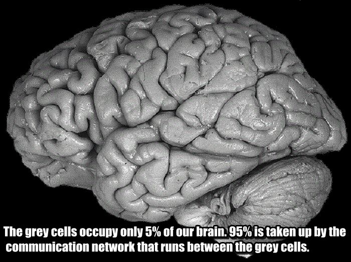 Facts You Didn't Know About Your Brain