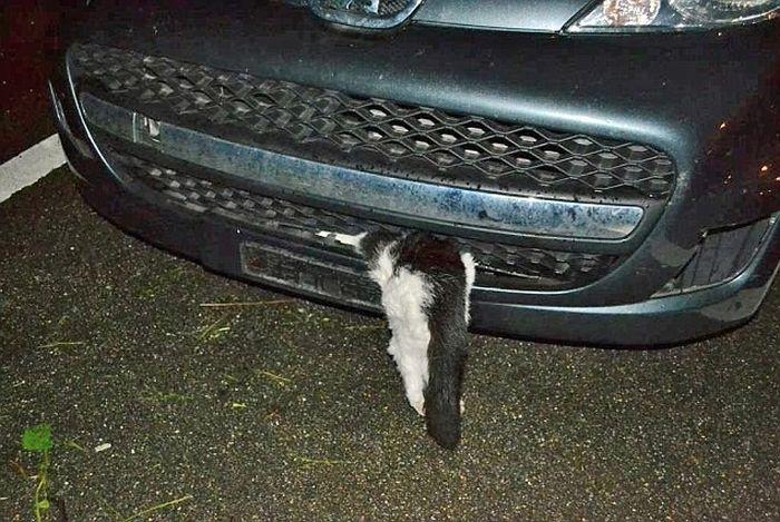 Cat Survives Head On Collision