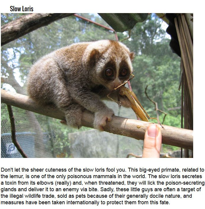 Cute Critters That Are Deadly