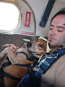 This Dog Loves To Go Skydiving