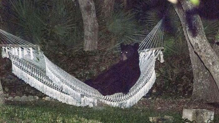 This Bear Does What It Wants