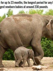 Strange Facts About Animal Pregnancies