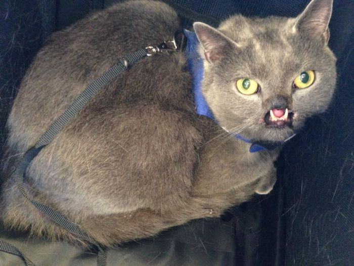 Meet Lazarus The Cat Without A Nose