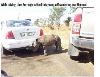 Poachers Leave Rhino Orphaned