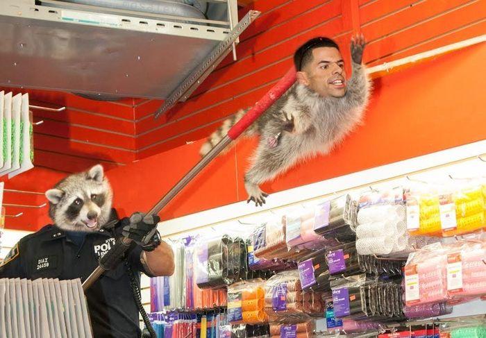New York City Raccoon Becomes Internet Sensation