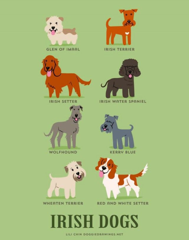 What Nationality Is Your Dog?