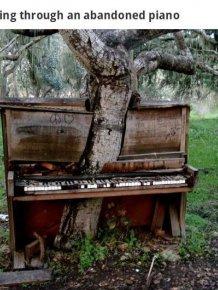 When Nature Reclaims Civilization