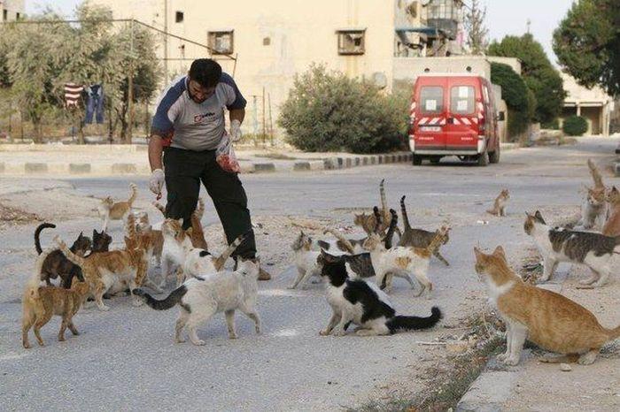 Syrian City Has Hundreds Of Stray Cats