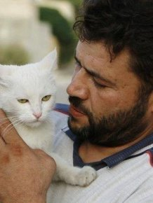 Syrian City Has Hundreds Of Stray Cats