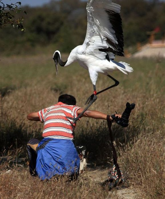 Photographer Gets Into A Fight With A Crane