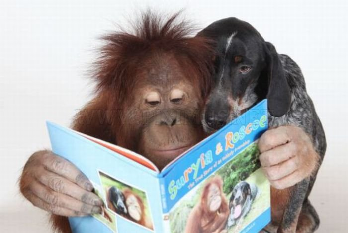 The Dog and the Orangutan are BFF