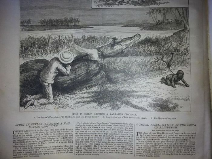 Using Humans To Hunt Crocodiles