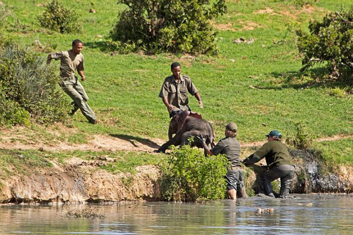 Brave Rangers Rescue A Baby Elephant