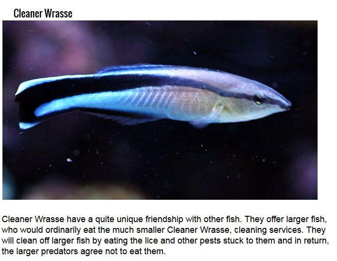 Secret Talents You Didn't Know Fish Had
