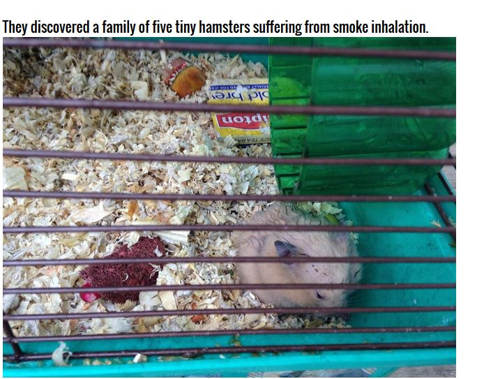Firefighters Rescue Hamsters From Burning House