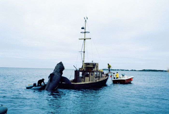 Get A Look Behind The Scenes Of Jaws With These Rare Photos