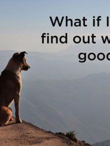 What Really Goes On Inside The Mind Of A Dog