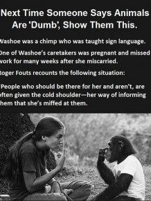 One Smart Monkey