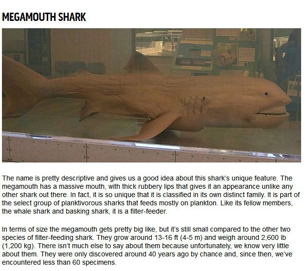 10 Strange Sharks You Didn't Know Were In The Ocean