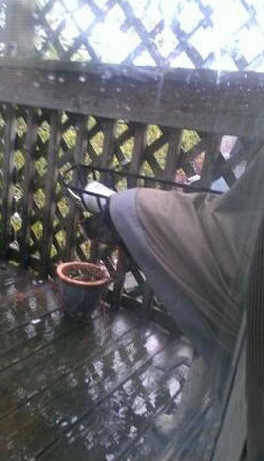 Dog Makes A Raincoat