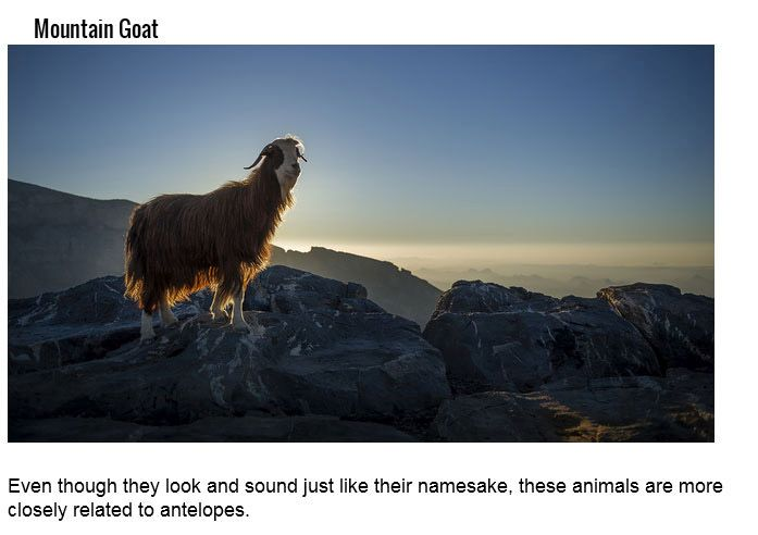 These Animals Have Very Misleading Names