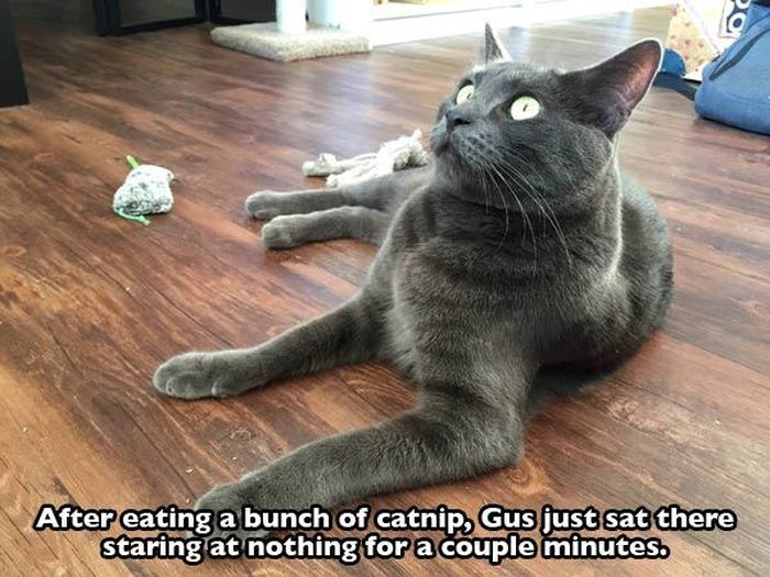 These Cats Are Completely Wasted Off Of Catnip