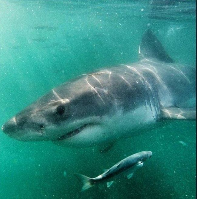 Shark Gets A Closeup