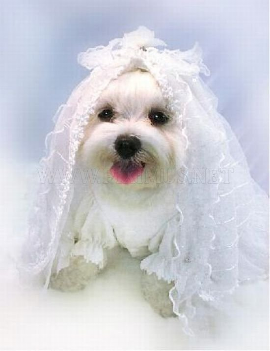 Cutest Animal Wedding Photos
