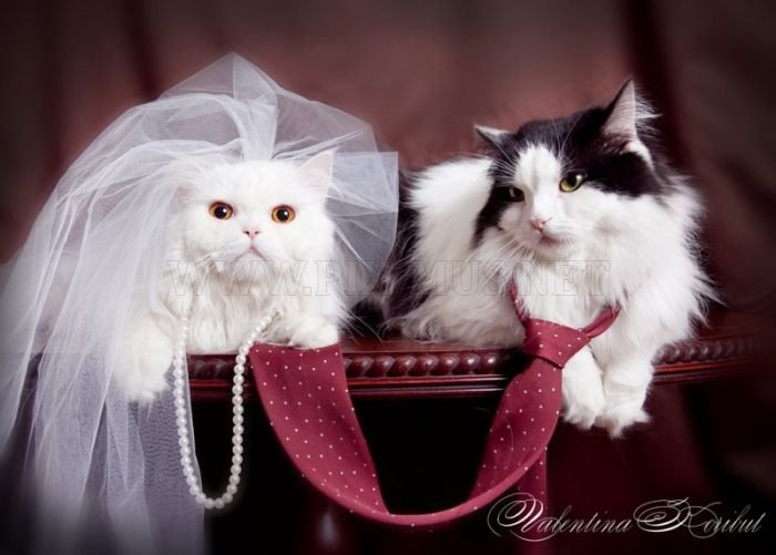 cutest animal wedding photos animals