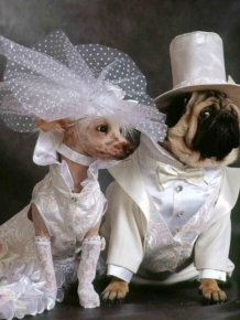 Cutest Animal Wedding Photos