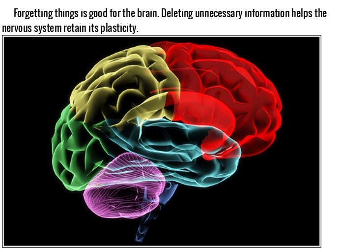 Things You Didn't Know Effect Your Brain In A Big Way